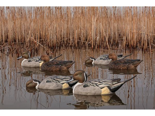 Pintail Duck Decoys for Hunting (6 Pcs)